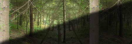 IMG_8263-PHOTOMONTAGE-FOREST