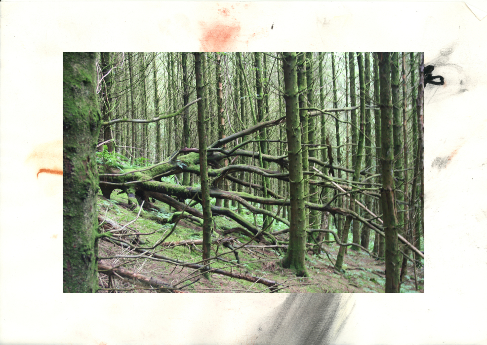 2,3p[4-PHOTOMONTAGE-FOREST-700H