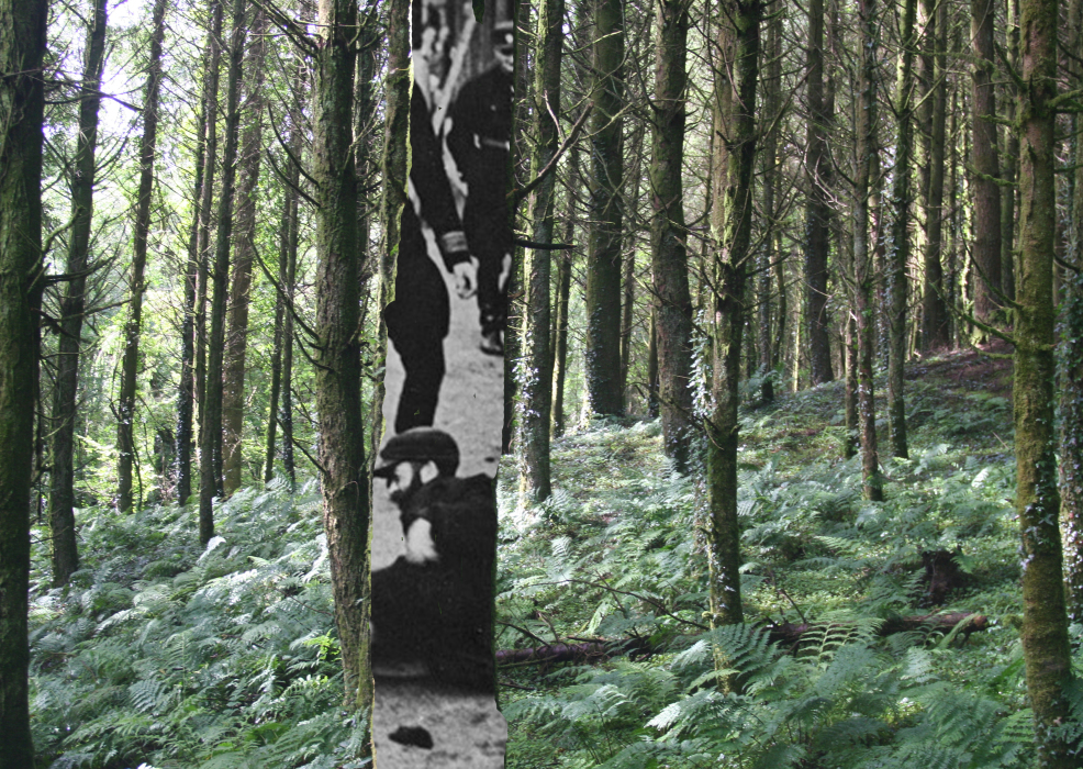 23pklk[4a-PHOTOMONTAGE-FOREST-700H