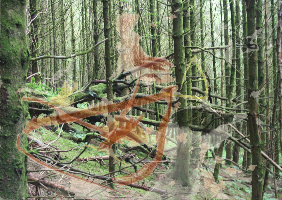 2k3p[4fhg-PHOTOMONTAGE-FOREST-700H