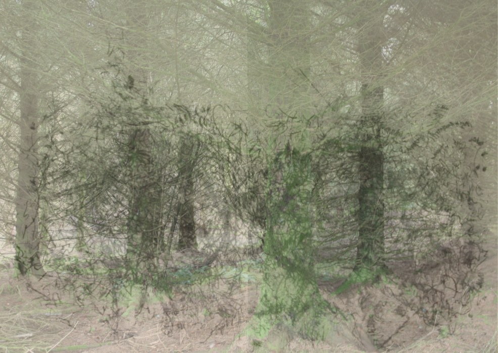 2kjl3p[4a-PHOTOMONTAGE-FOREST-700H