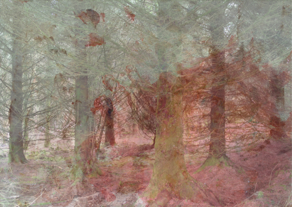 2lfws3pop[4-PHOTOMONTAGE-FOREST-700H