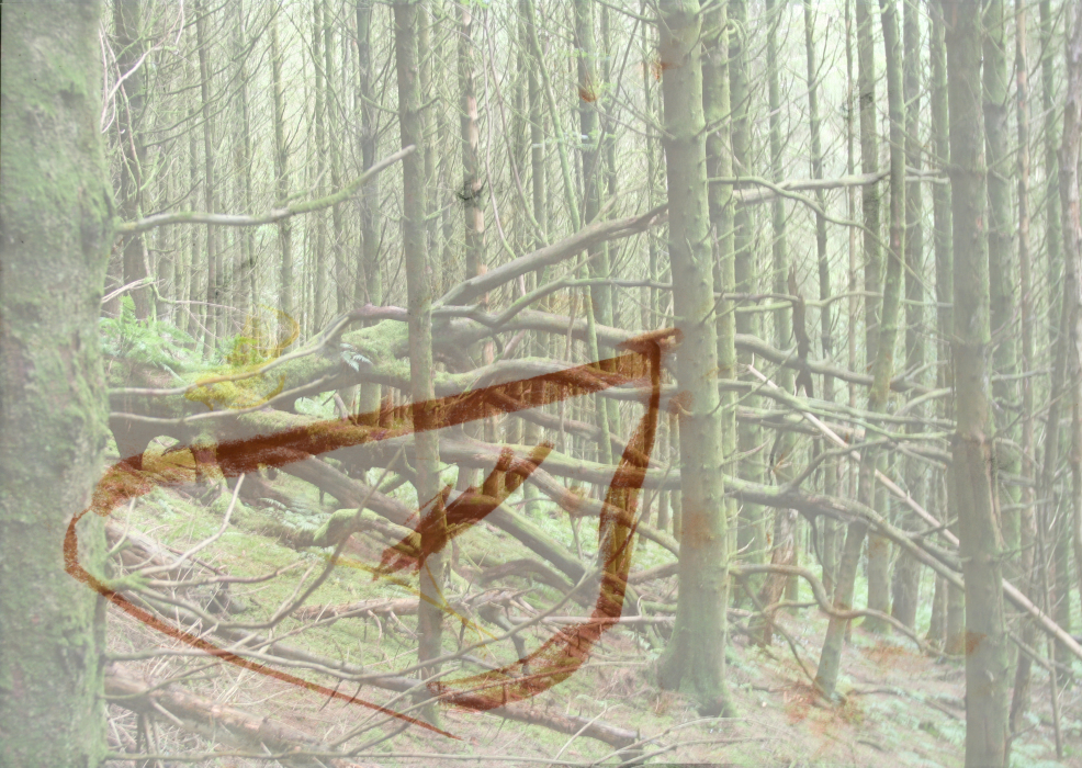 2s3p[4a-PHOTOMONTAGE-FOREST-700H