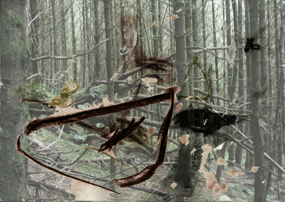 2uykk3p[4-PHOTOMONTAGE-FOREST-700H
