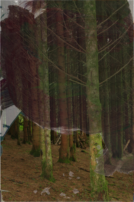 IMG_olp8l;[246a-PHOTOMONTAGE-FOREST-700H