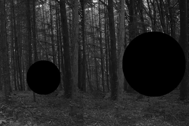 forest3-PHOTOMONTAGE-FOREST-407H