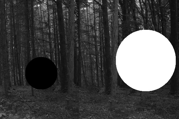 forest4-PHOTOMONTAGE-FOREST-407H