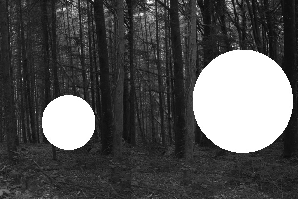 forest5-PHOTOMONTAGE-FOREST-407H