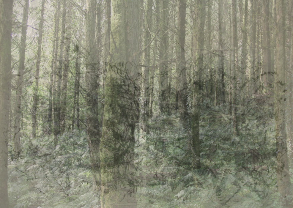 kknk;j;-PHOTOMONTAGE-FOREST-700H