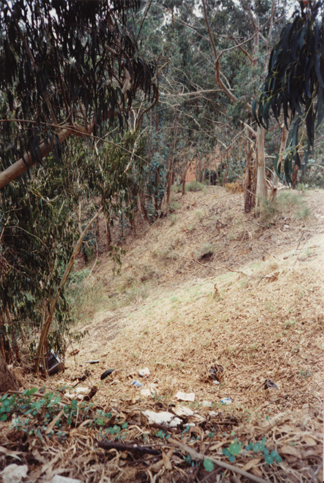 spain1-700H-PHOTO-CLEARING