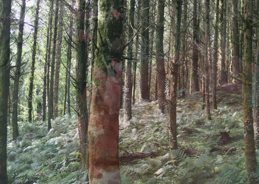 23;lnhp[4a-PHOTOMONTAGE-FOREST-700H