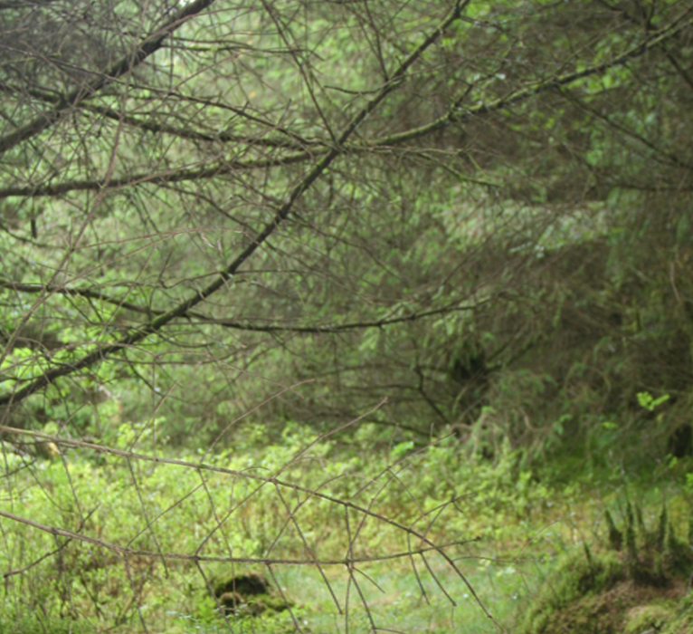 303_170-PHOTOMONTAGE-FOREST-700H