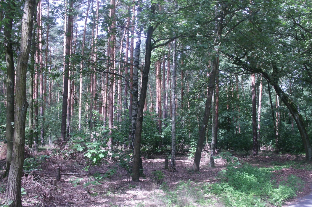 CIMG0174-PHOTOMONTAGE-FOREST-700H