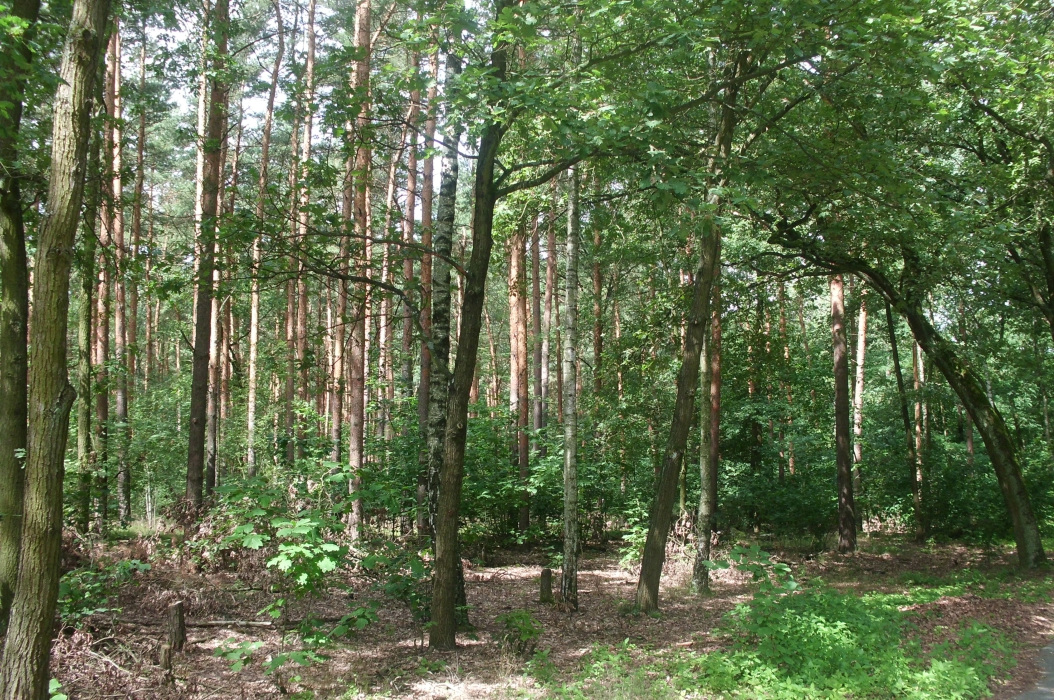 CIMG0175-PHOTOMONTAGE-FOREST-700H