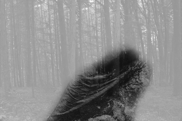 IMG_6305gthj-PHOTOMONTAGE-FOREST-407H