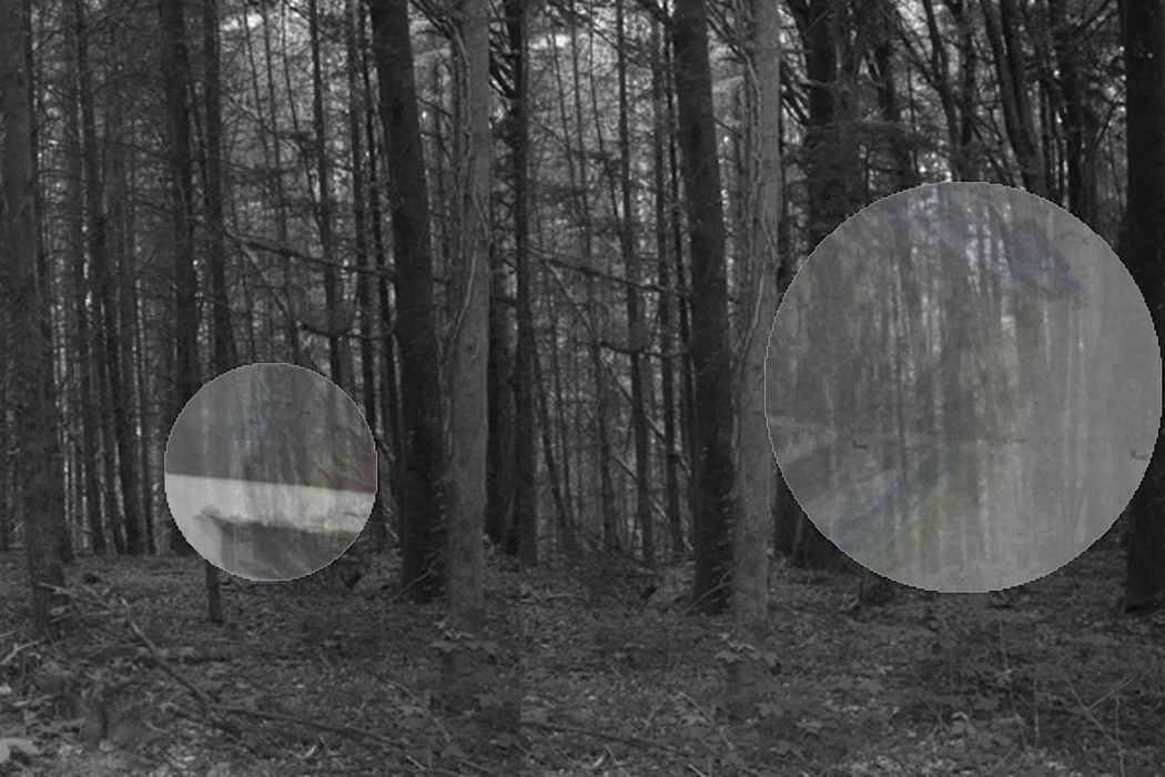 IMG_63ll31-PHOTOMONTAGE-FOREST-700H