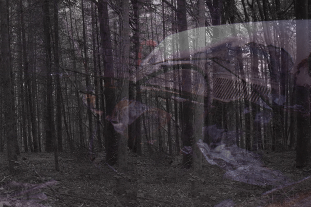 IMG_6uin331-PHOTOMONTAGE-FOREST-7OOH