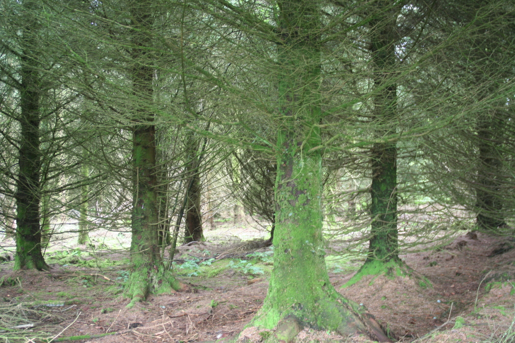 IMG_8232-PHOTOMONTAGE-FOREST-700H