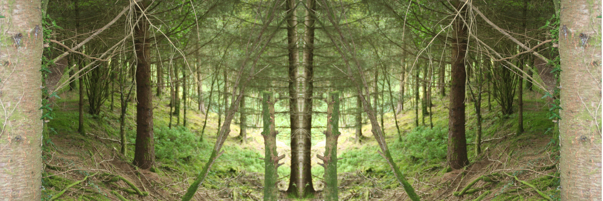 IMG_82aS63-PHOTOMONTAGE-FOREST-700H