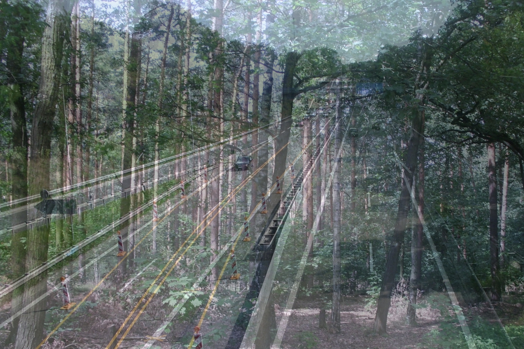 IMG_82;d46a-PHOTOMONTAGE-FOREST-700H