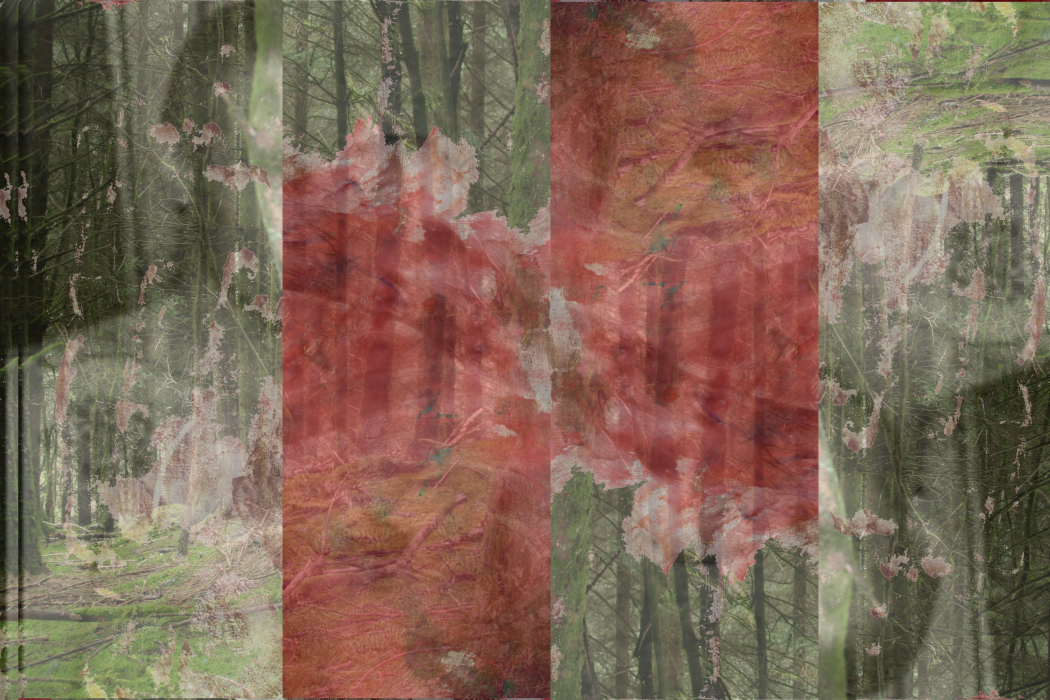 IMG_82l.46ab-PHOTOMONTAGE-FOREST-700H