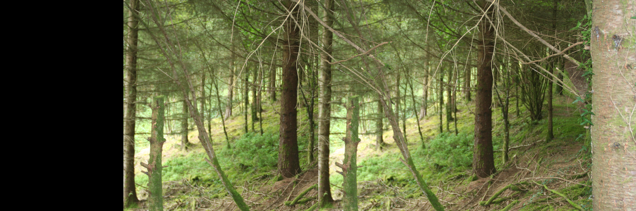 IMG_82lg63-PHOTOMONTAGE-FOREST-700H