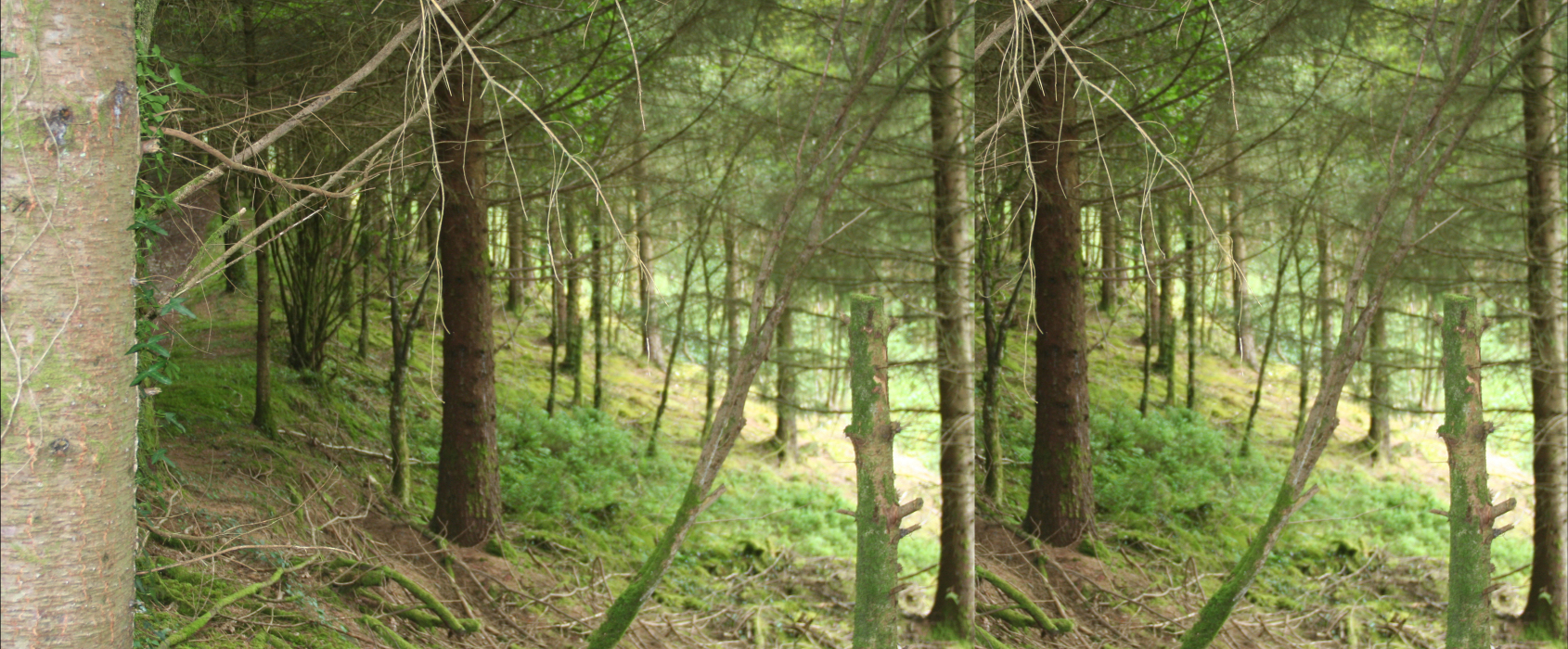 IMG_8jk263-PHOTOMONTAGE-FOREST-700H