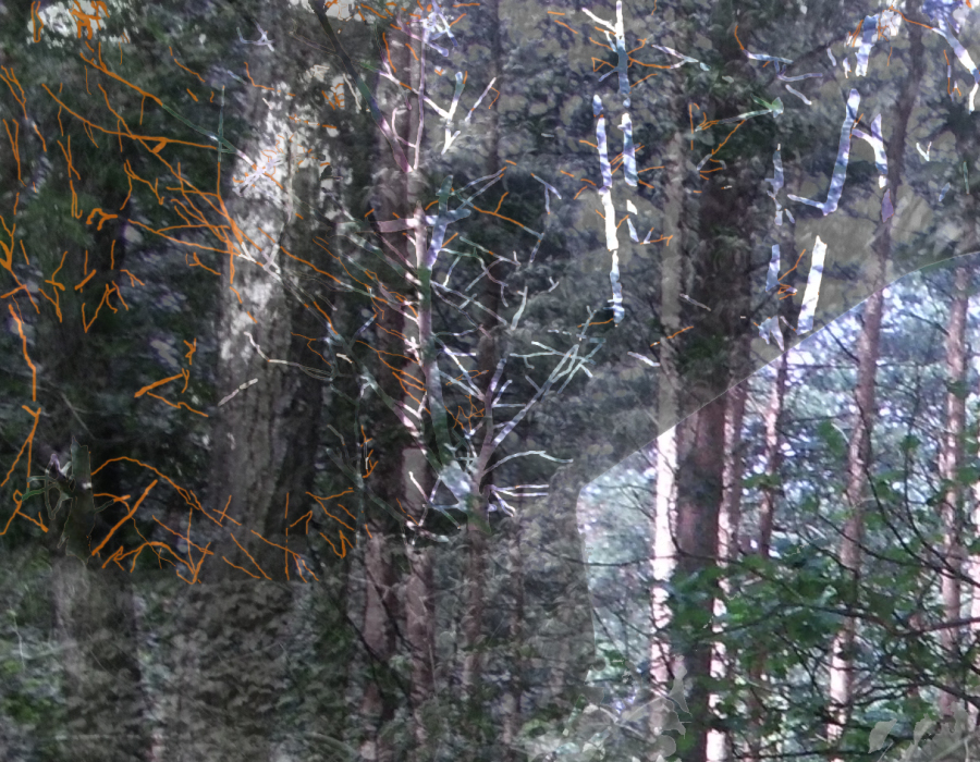 Untuikitled-1hlha-PHOTOMONTAGE-FOREST-700H