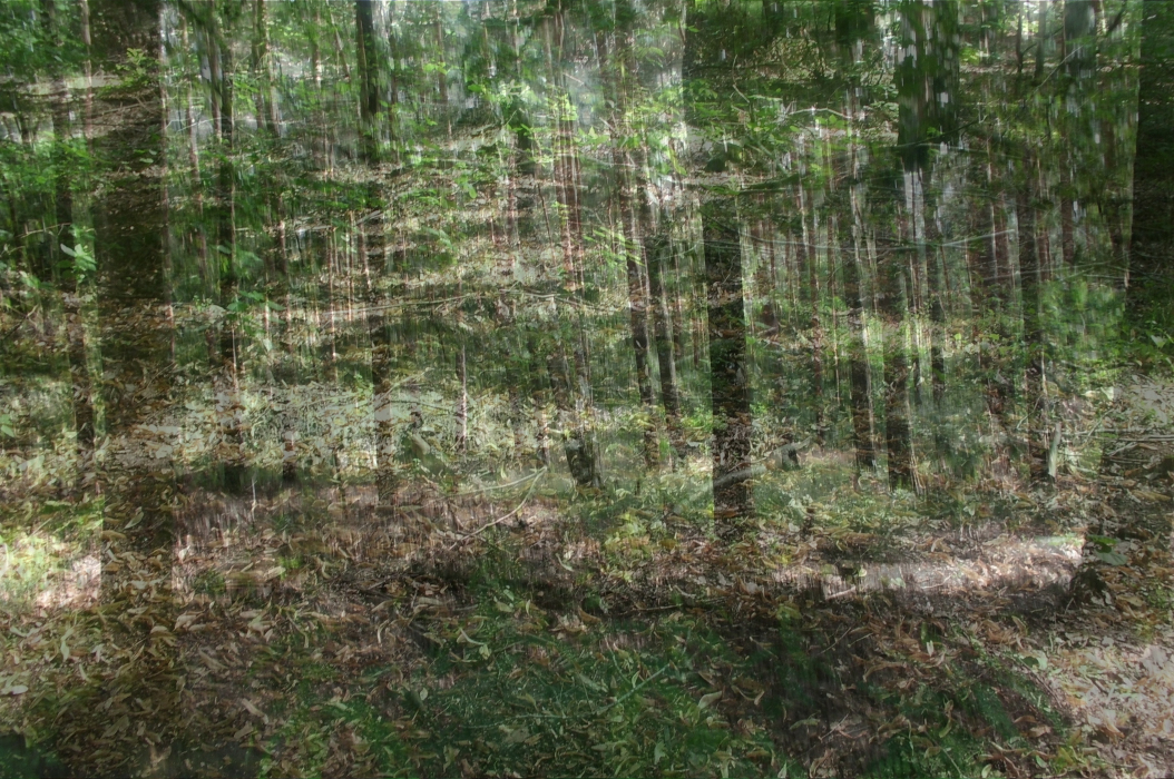 berlin-PHOTOMONTAGE-FOREST-700H