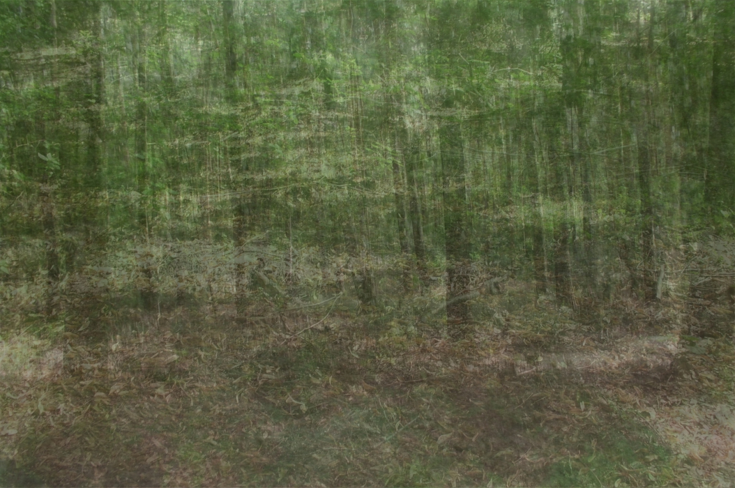 bersdfglin-PHOTOMONTAGE-FOREST-700H