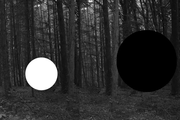 forest2-PHOTOMONTAGE-FOREST-407H
