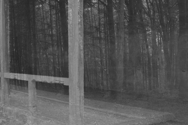 forest6-PHOTOMONTAGE-FOREST-407H